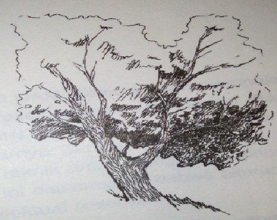 Contoh Soal Psikotes Kerja dan Kunci Jawaban tes baum tree 01