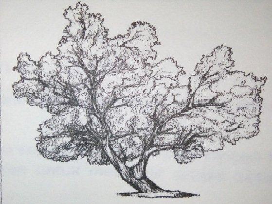 Contoh Soal Psikotes Kerja dan Kunci Jawaban tes baum tree 02