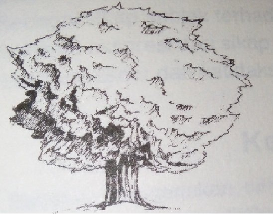 Contoh Soal Psikotes Kerja dan Kunci Jawaban tes baum tree 04